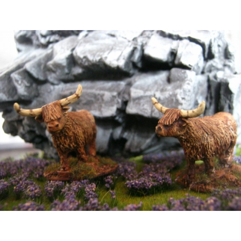 Highland Cattle by Christian Ludwig